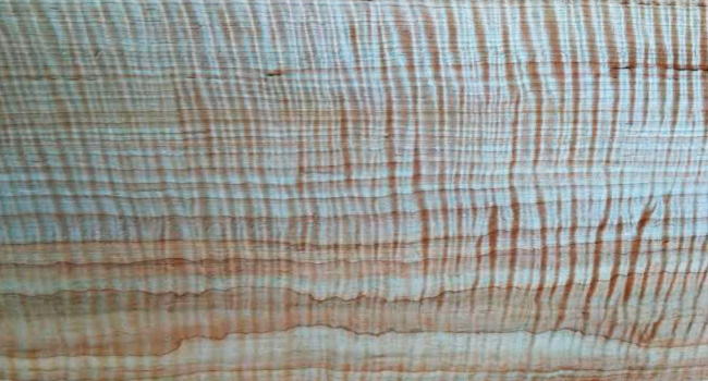 Image of Curly Maple Wood Available for Online Ordering
